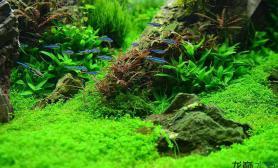 走一步想百步水草缸这就是造景的魅力鱼缸水族箱