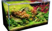 60CM水草缸造景小品有点荷兰的风格