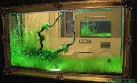 家装与水草缸水草缸总有一款你需要沉木杜鹃根青龙石水草泥沉木杜鹃根青龙石水草泥沉木杜鹃根青龙石水草泥