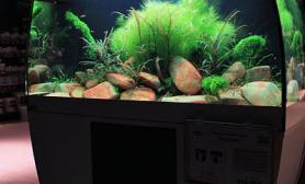水草缸造景沉木水草泥化妆砂青龙石120cm尺寸设计28