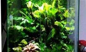 水草造景我的雨林小缸