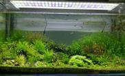 1米2草缸3个月(DIY90W LED)留影