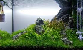 水草缸造景沉木水草泥化妆砂青龙石60CM尺寸设计摆石教程