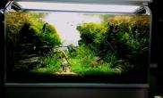 水草造景作品:水草造景(90cm)-63