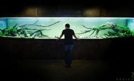 水族箱造景厦门自鱼自乐7米双面缸的诞生