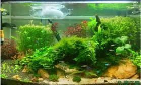 水草造景自家小缸~随便种种~