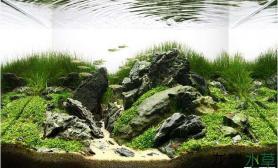 小缸造出大景观水草缸45cm以下水草造景作品欣赏