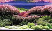水族箱造景锦簇