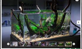 水族箱造景超帅的外国高手演示水草缸开缸水草缸绝对养眼鱼缸水族箱