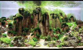 水族箱造景饱含诗意的水草缸