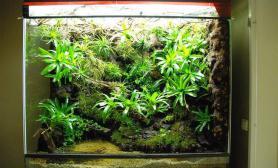 雨林水陆生态缸16