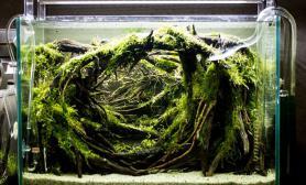 鱼缸MOSS水草造景密布深林