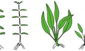 关于水草造景各水草种类的修剪方法