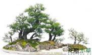 盆景与水景里面的树石组合赏析
