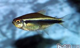 鱼对水的酸碱度有什么要求