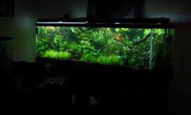 美国MM水族爱好者沉木青龙石水草造景150CM及以上尺寸设计