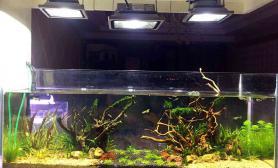 120窄缸沉木杜鹃根青龙石水草泥用的LED射灯沉木杜鹃根青龙石水草泥