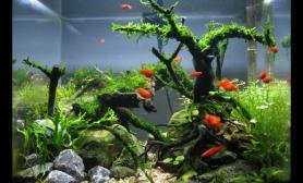 《相依》《相伴》的俩个树桩造景缸鱼缸水族箱
