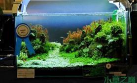 松口气水草缸过来欣赏一下——细致的水草造景展