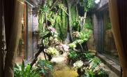 水草造景户外雨林造景