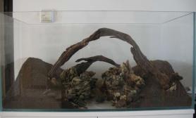 菜鸟作品《双桥》准备种草水草缸急求修改意见沉木杜鹃根青龙石水草泥