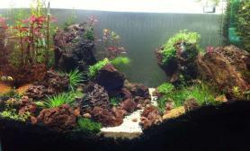 鱼缸造景愚公可以移山水草缸小虾可以填海鱼缸水族箱鱼缸水族箱