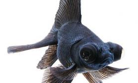 热带鱼打氧的注意事项