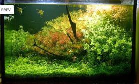 水草缸造景沉木水草泥化妆砂青龙石60CM尺寸设计14