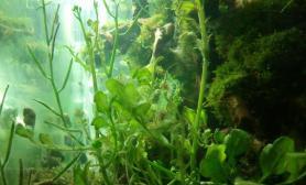 各种野草转水水草缸各种野鱼野虾沉木杜鹃根青龙石水草泥
