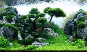 沉木青龙石水草造景90CM尺寸设计48