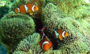 高科技海水鱼缸养好海水鱼提高观赏性(图)