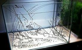 韩国人的开缸全过程水草缸儿子开心的与缸合影