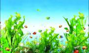 关于超白鱼缸水草养殖方法大全详解