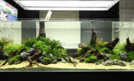 波兰greenaqua水族馆的一个大缸,气势与细节兼顾