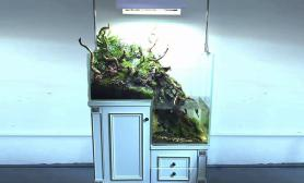 关于家居水景之水陆缸造景介绍