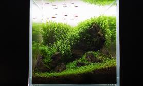 沉木青龙石水草造景45CM及以下尺寸设计02