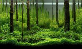 鱼缸造景震撼的水草造景