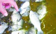 夏季预防鱼缺氧的办法