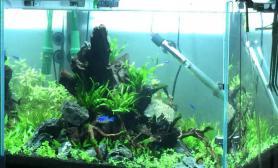水变的清澈多了水草缸哈哈鱼缸水族箱继续努力鱼缸水族箱