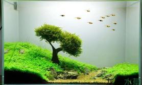 水草造景《司马滩》莫斯树成景记 建缸过程和黑毛战斗史