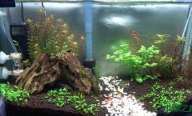 水草造景开缸1个多月水草缸种得有点乱