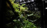 Greendeep青蛙MOSS精品雨林水陆生态缸