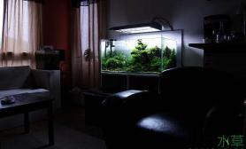 与家装融为一体的水草缸造景