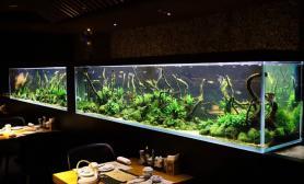 造景缸与商业空间南京艾尚天地四楼鱼寿司沉木水草缸