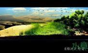 水族箱造景绿洲