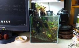 水草造景办公室的小缸  20X20X20