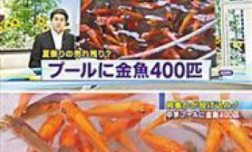 泳池惊现500金鱼(图)