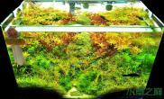 水草造景水草缸适合养什么鱼?