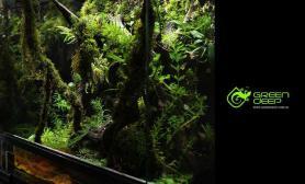 水族箱造景60X40X60全水绿树缸