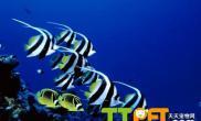 冬天热带鱼的饲养方法